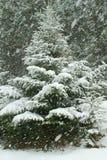 Ель под снежностями с снегом покрыла ветви в зиме Стоковое Фото