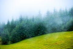 Ель тумана тумана Стоковое Изображение