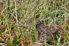 Жаба в траве Стоковое фото RF