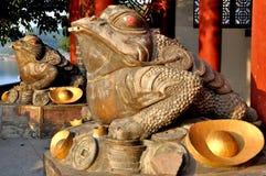 Жаба золота Стоковая Фотография