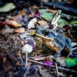 Жаба и гриб стоковые фотографии rf