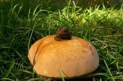 Жаба на toadstool Стоковое Изображение