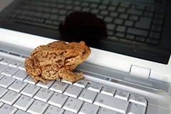 жаба отражения Стоковая Фотография