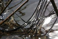 Жаба порождает стоковые фотографии rf