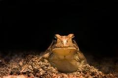жаба потехи Стоковое фото RF