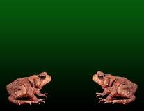 жаба предпосылки Стоковое Изображение RF