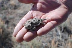 жаба руки роговая Стоковая Фотография RF