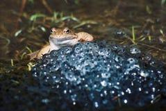 Жаба счастливо сидя Стоковая Фотография