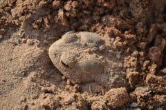 жаба Стоковые Фотографии RF
