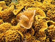 Жабры глиста моря Стоковые Изображения RF