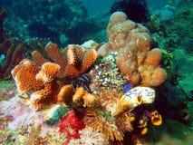 Жабры глиста моря Стоковые Фото