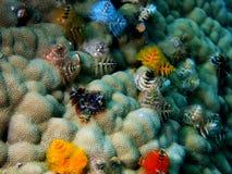 Жабры глиста моря Стоковая Фотография RF