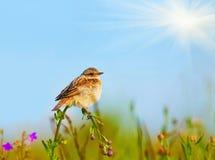 жаворонок цветка Стоковые Изображения