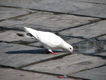 жажда Стоковые Фото