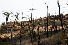 Жалоба сгорели лесом, который стоковая фотография rf