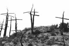 Жалоба сгорели лесом, который Стоковые Фотографии RF