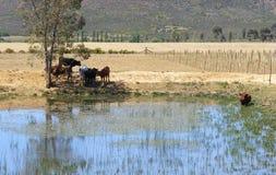 жара Африки стоковое фото
