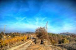 Жара цветов осени Стоковая Фотография