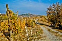 Жара цветов осени Стоковая Фотография RF