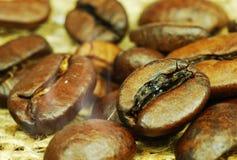 жарить в духовке кофе фасолей Стоковые Фотографии RF