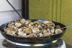 Жаркое грибов Стоковое фото RF