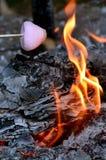 Жаркое зефира на огне лагеря Стоковые Изображения