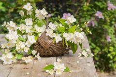 жасмин в корзине Стоковая Фотография RF