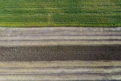 Жатка жмет урожай в поле рядом с зеленым полем с мозолью Украина вид с воздуха Стоковое фото RF