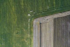 Жатка жмет урожай в поле рядом с зеленым полем с мозолью Украина вид с воздуха Стоковое Изображение RF
