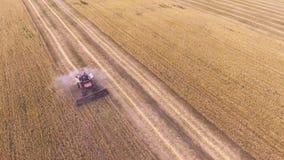 Жатка зернокомбайна вида с воздуха собирает пшеницу видеоматериал