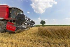Жатка зернокомбайна жать пшеницу Зерно жать зернокомбайн позволяет gps компьютера зернокомбайнов зернокомбайна совершенно кормило Стоковые Фотографии RF