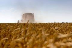 Жатка зернокомбайна жать пшеницу Зерно жать зернокомбайн позволяет gps компьютера зернокомбайнов зернокомбайна совершенно кормило Стоковая Фотография RF