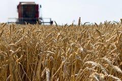 Жатка зернокомбайна жать пшеницу Зерно жать зернокомбайн позволяет gps компьютера зернокомбайнов зернокомбайна совершенно кормило Стоковое Фото