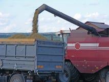 Жатка зернокомбайна льет семена oast в поле Стоковое Изображение