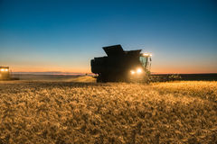 Жатка зернокомбайна работая на урожае пшеницы на ноче Стоковые Фото