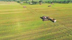 Жатка зернокомбайна разгржает пшеницу в тележку акции видеоматериалы