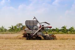 Жатка зернокомбайна риса работая в зрелом поле риса Стоковое Изображение