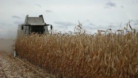 Жатка зернокомбайна собирая мозоль маиса видеоматериал
