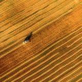 Жатка работая в поле и косит пшеницу Украина вид с воздуха Стоковая Фотография RF