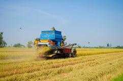 Жатка риса в полях риса стоковая фотография rf