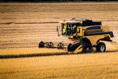 Жатка риса, средний взгляд стоковые фотографии rf