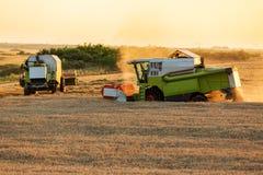 Жатки зернокомбайна в действии на заходе солнца пшеничного поля Стоковые Изображения
