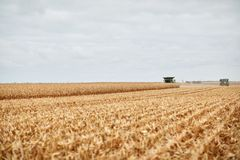 2 жатки зернокомбайна жать маис Стоковое Изображение RF