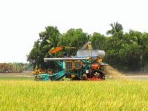 Жатки зернокомбайна режа рис Стоковые Фото