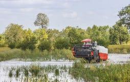 Жатки зернокомбайна Таиланда в воде поля риса Стоковые Изображения RF
