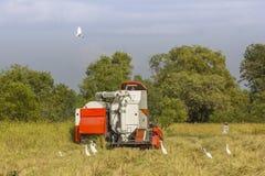 Жатки зернокомбайна Таиланда работая поле риса Стоковые Фото