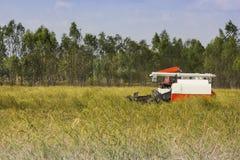 Жатки зернокомбайна Таиланда работая поле риса Стоковые Изображения RF