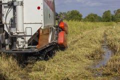 Жатки зернокомбайна Таиланда работая рис field задний взгляд Стоковые Фотографии RF