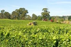жать виноградин Стоковое Изображение RF