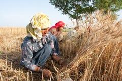 жать женщину пшеницы Стоковое Изображение RF